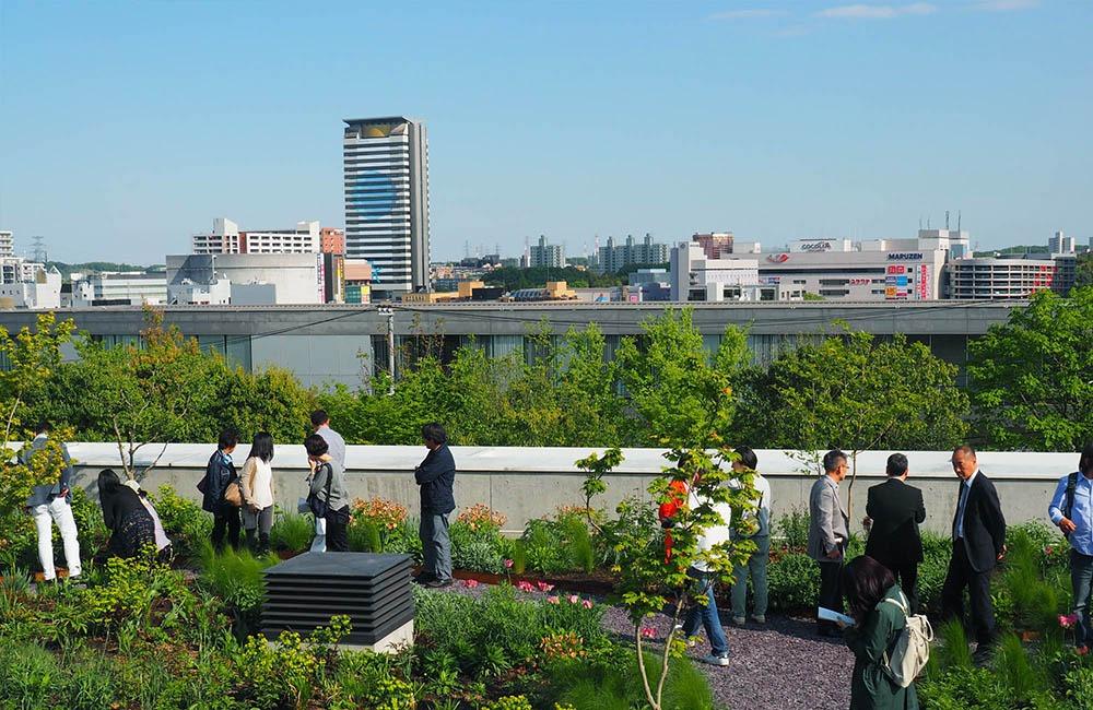 Vườn trên mái tại trụ sở Green Wise